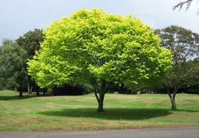 Điềm báo xung quanh giấc mơ cây cổ xanh tốt