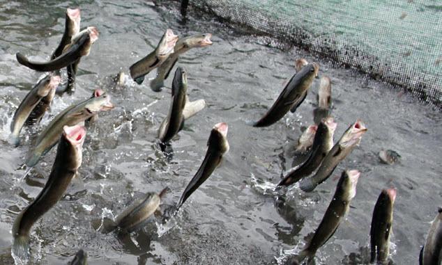 mơ thấy cá đánh con gì