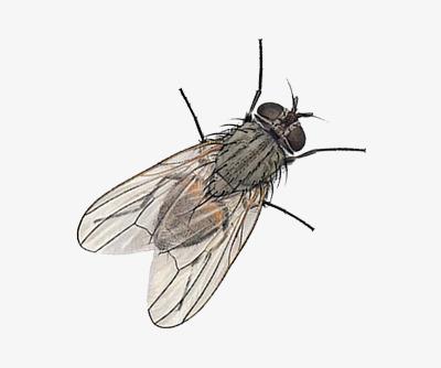 nằm mơ thấy ruồi