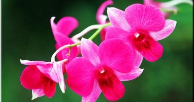 Lựa chọn Xổ số miền Bắc thông qua giấc mơ thấy hoa