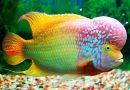 Trong giấc mơ thấy cá nên đánh con số nào dễ về