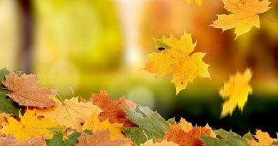 Nằm mộng thấy lá rụng có những ý nghĩa gì đặc biệt?