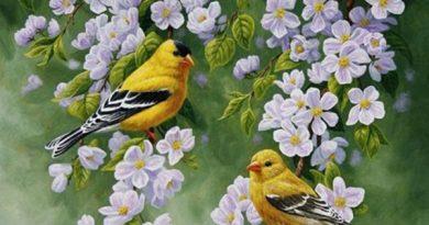 Mơ thấy chim đánh con gì đổi đời, chim là số mấy?