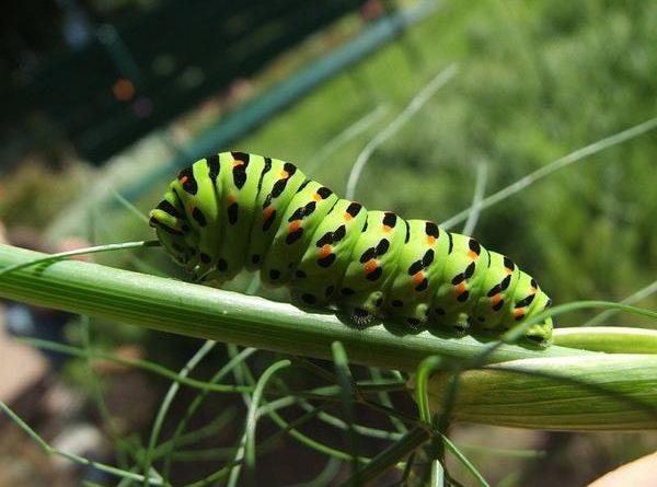 Nằm mơ thấy sâu bọ có ý nghĩa gì đánh con gì dễ trúng